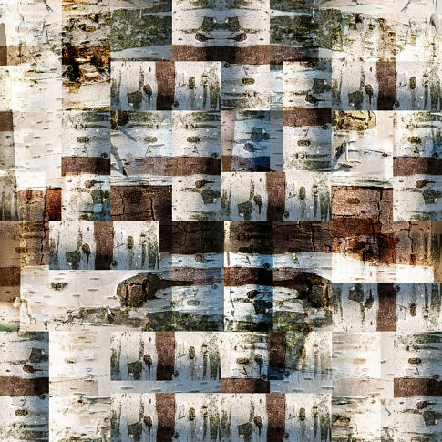 composition numérique à partir de photos de bois et d'écorces