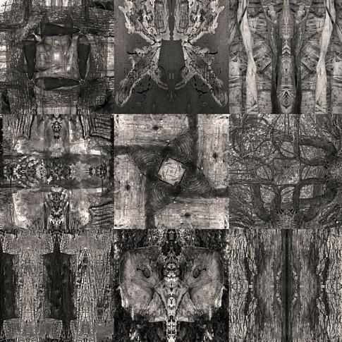 composition numérique à partir de photos de bois et d'écorces.